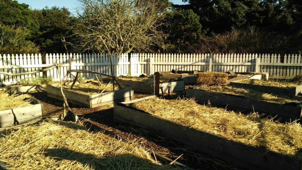 Pictured: Raised garden beds covered in straw mulch.