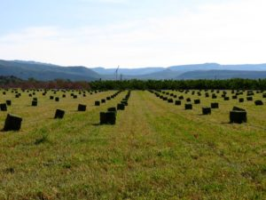Hay field in the mountains image.